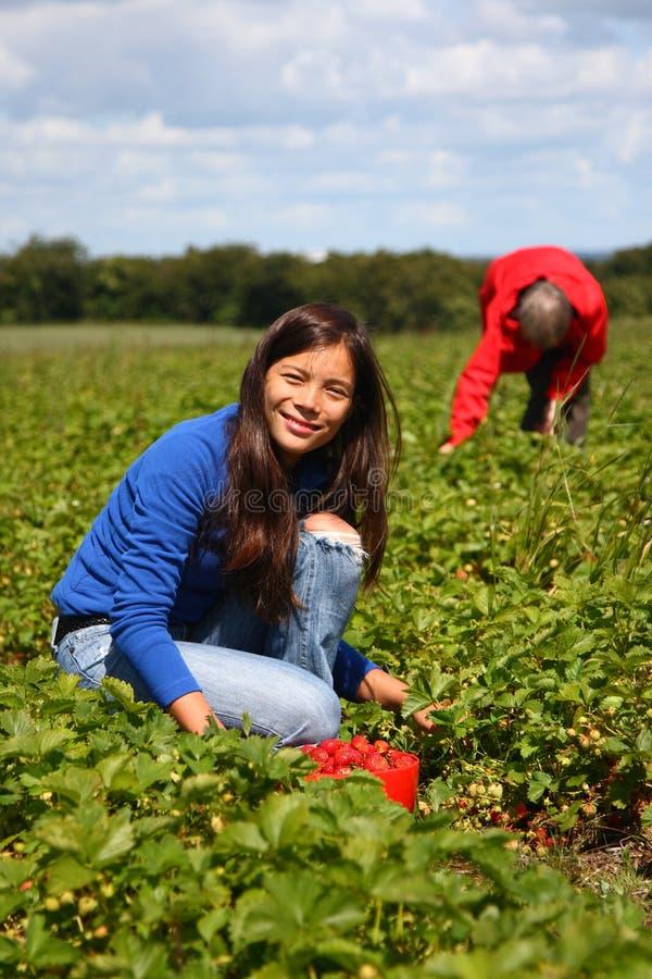 Summer field girl working picking strawberries