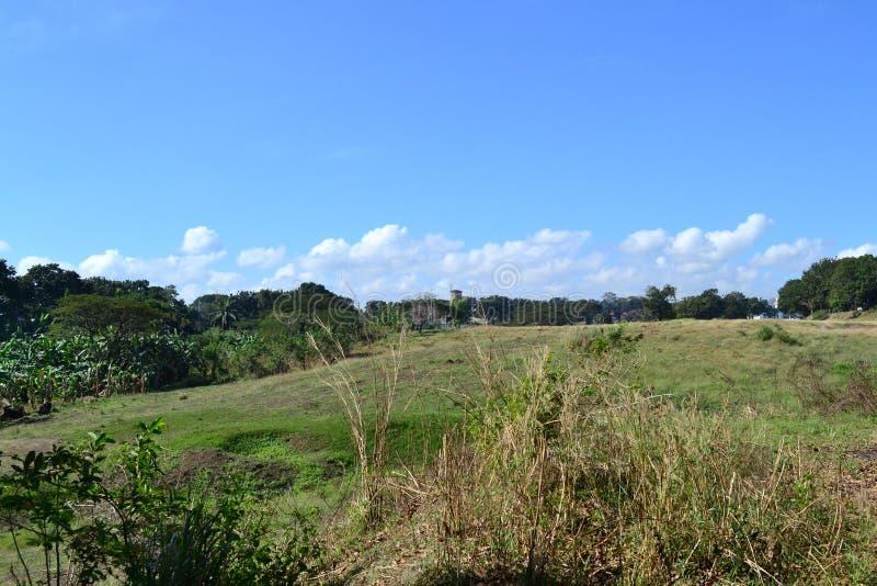 Summer field. Sunken Garden summer field at Muntinlupa Philippines royalty free stock images