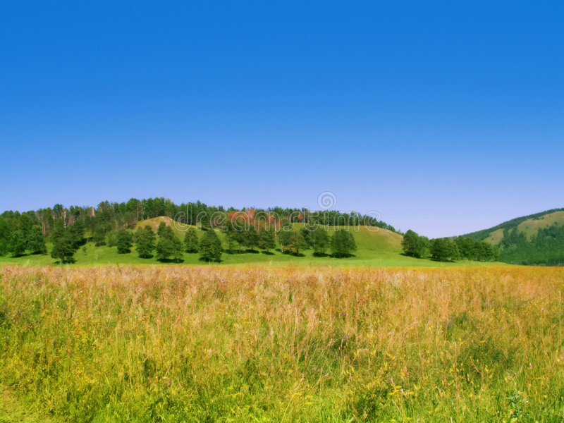 Download Summer Field With Trees On The Hill Stock Photo - Image: 6024542