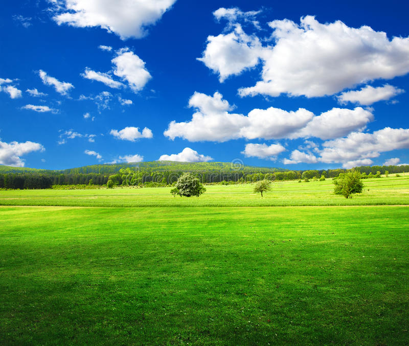 Download Summer fields stock image. Image of landscape, grass - 23230041