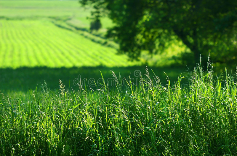 Summer fields of green stock photography