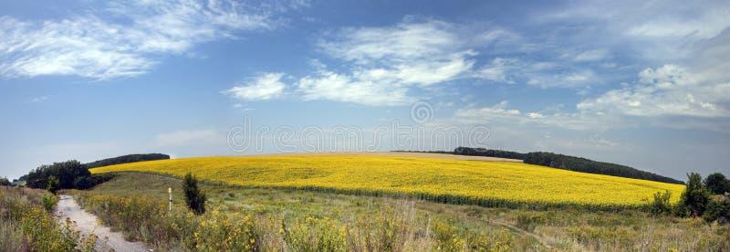 Summer fields in Ukrainian stock images