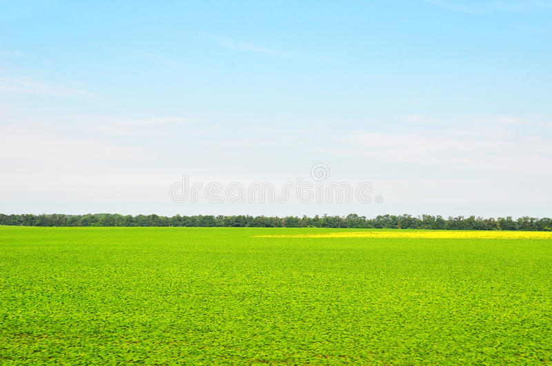 Summer filed landscape. Summer field landscape with green tree and blue sky royalty free stock photo