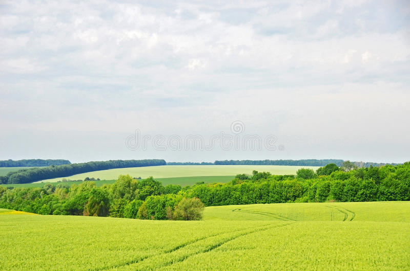 Summer filed landscape. Summer field landscape with green tree and blue sky stock image
