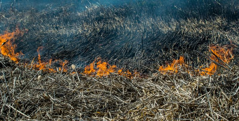Summer fire in a dry field royalty free stock photo