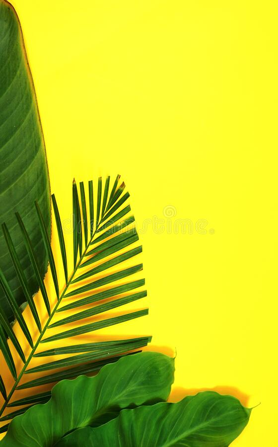 Summer flat lay with tropical leaves, palm fronds on bright yellow background stock images