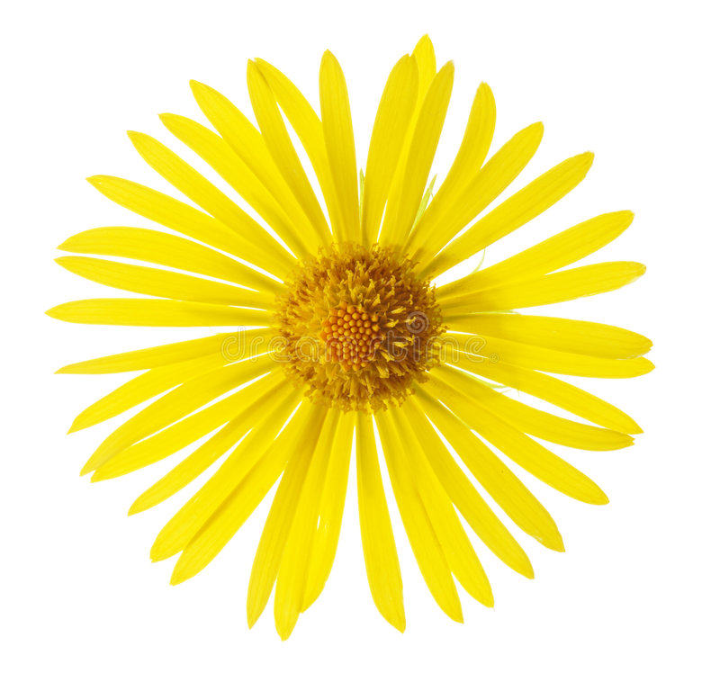 Download Summer Flower stock image. Image of flower, cutout, orientale - 2536825