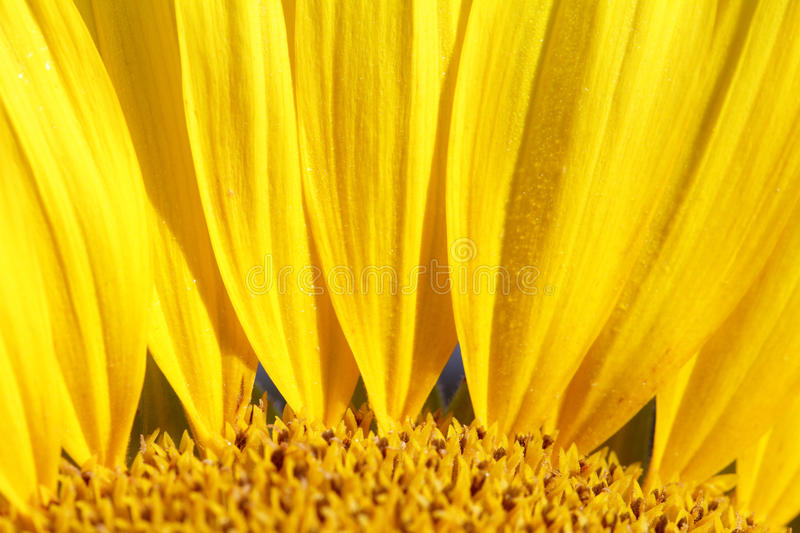 Summer Flower Background Stock Photography