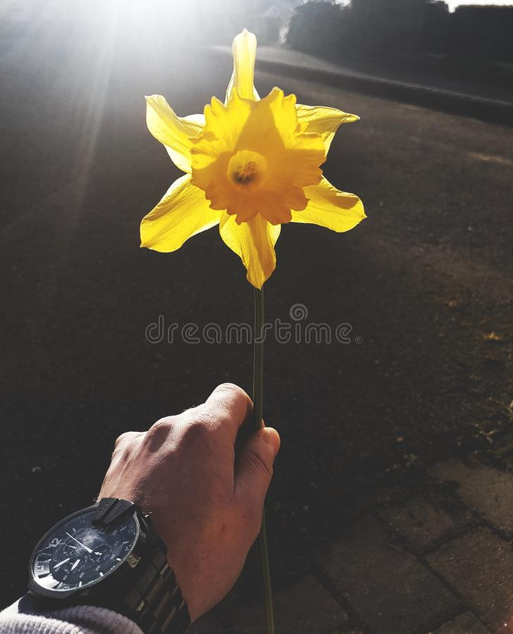 Summer flower diesel watch happy stock image