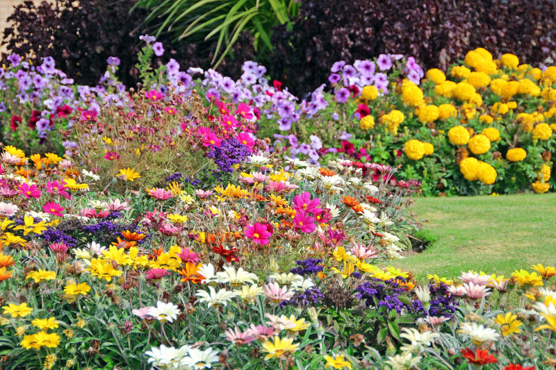 Summer flower display. Photo of a pretty summer flower display with a variety of plants and colours stock photo