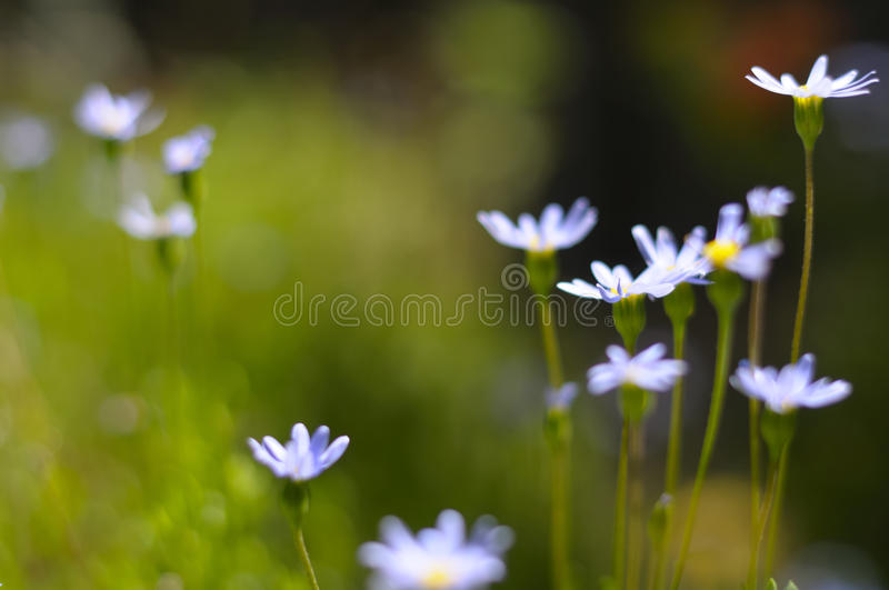 Download Summer Flower Field Stock Images - Image: 15546094
