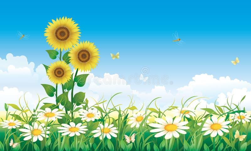 Summer flower meadow stock illustration