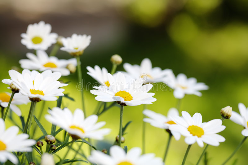 Summer Flowers royalty free stock images