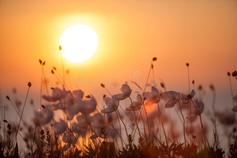 Summer flowers against setting sun stock photos