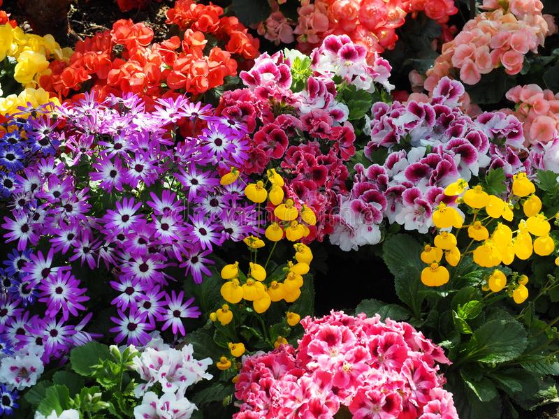 Summer Flowers In Bloom royalty free stock photography
