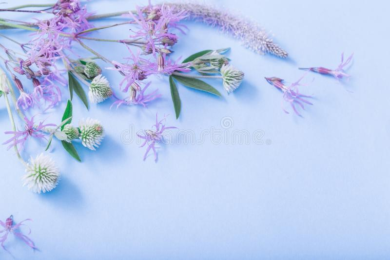 Summer flowers on blue paper background royalty free stock images