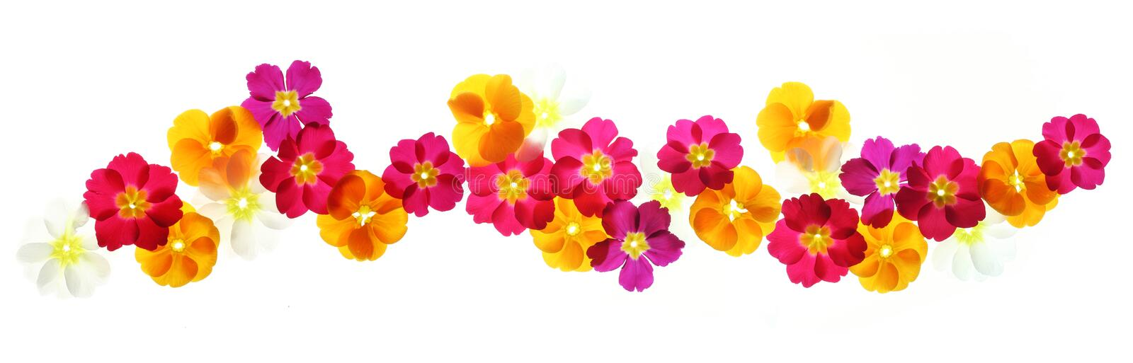 Summer flowers border stock images