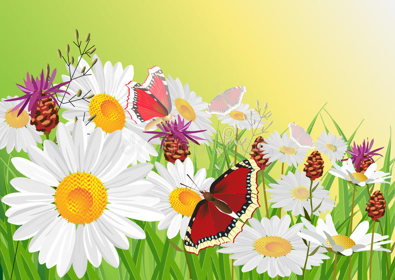 Summer, flowers and butterfly. royalty free illustration