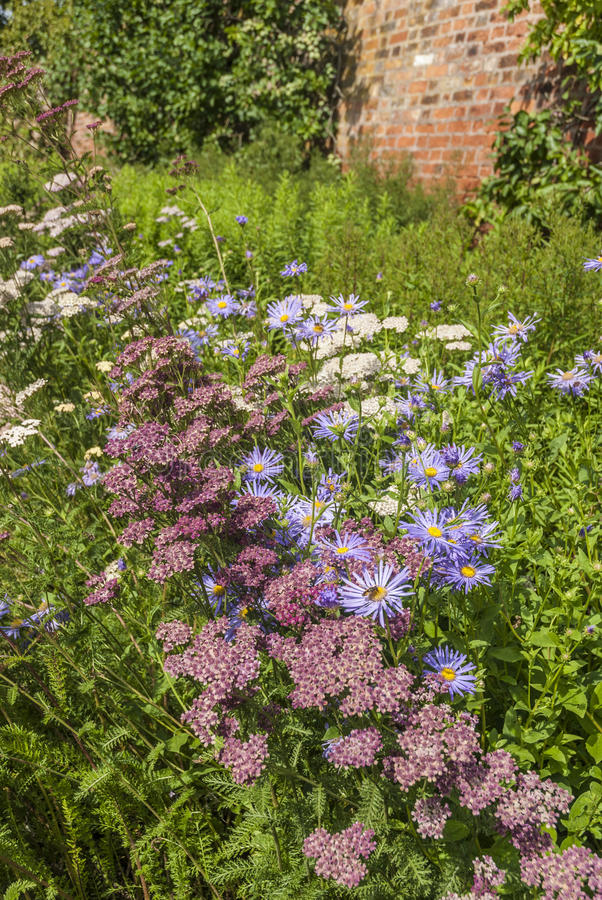 Download Summer Flowers stock photo. Image of wildflower, blue - 35675962