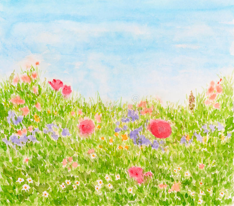 Summer Flowers on Daylight Meadow, Watercolor Hand Painted vector illustration