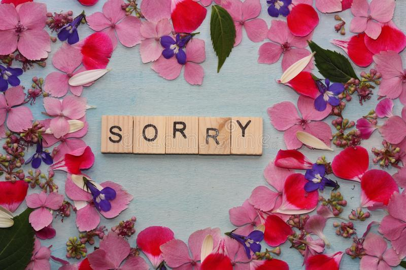 Frame of flowers with sorry word. Summer flowers frame with sorry word. Flowers on blue background stock images