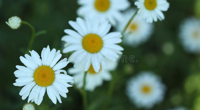 Summer flowers in garden stock photography