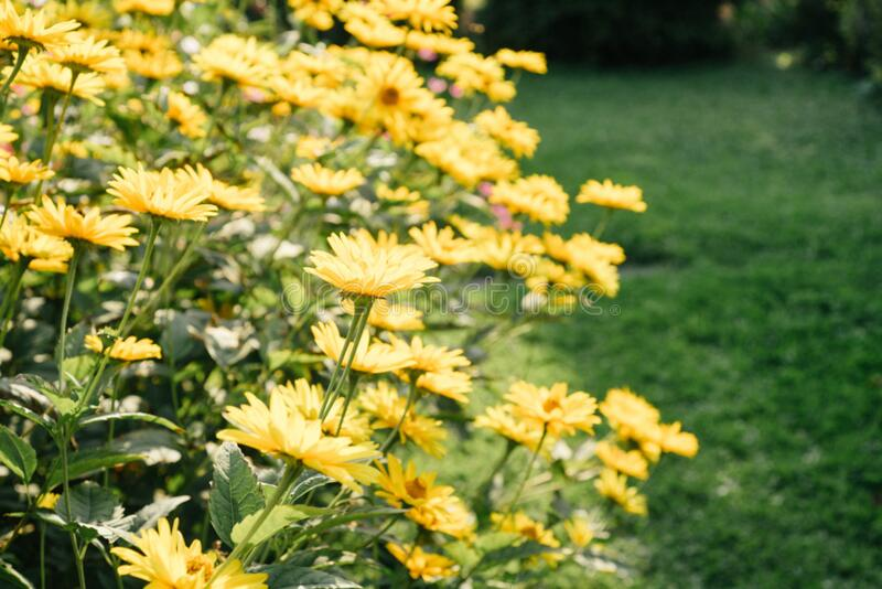 Summer flowers in garden royalty free stock photography