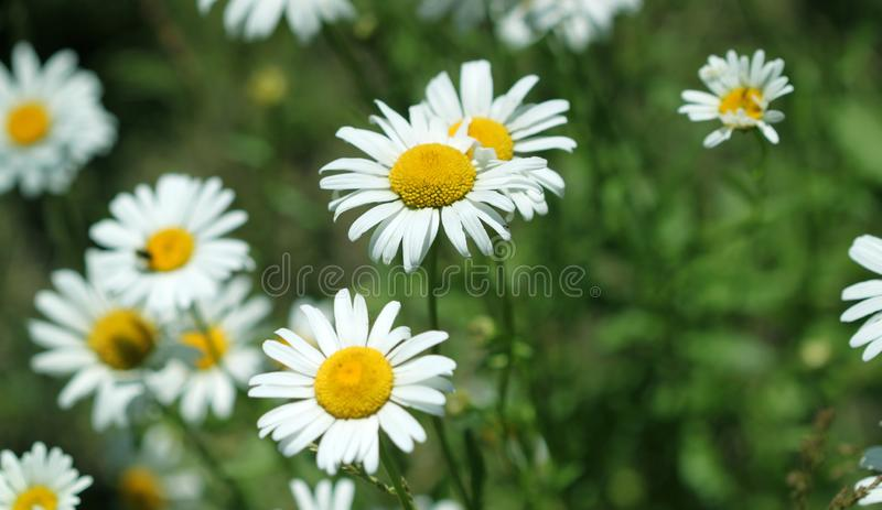 Summer flowers in garden royalty free stock photos