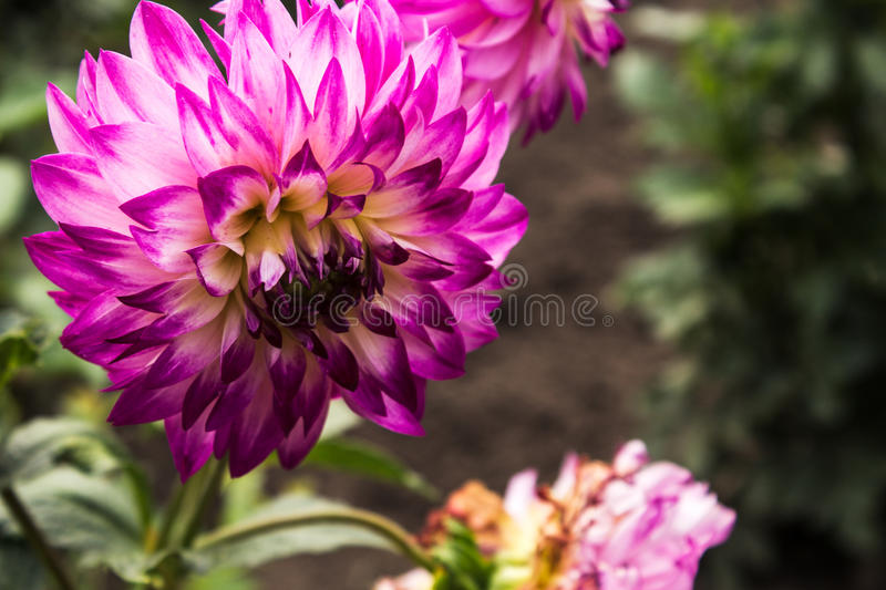 Summer flowers in the garden stock photography
