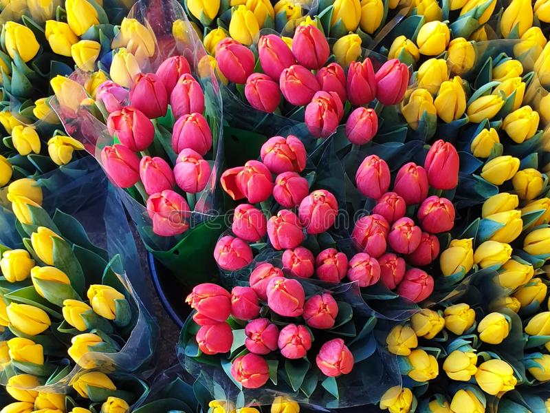 Summer Flowers Market Red Yellow Tulip bouquet background. Chic  Tulip Colorful Floral Background ,Summer Flowers Market Red Yellow Tulip bouquet aroma greetings stock photography