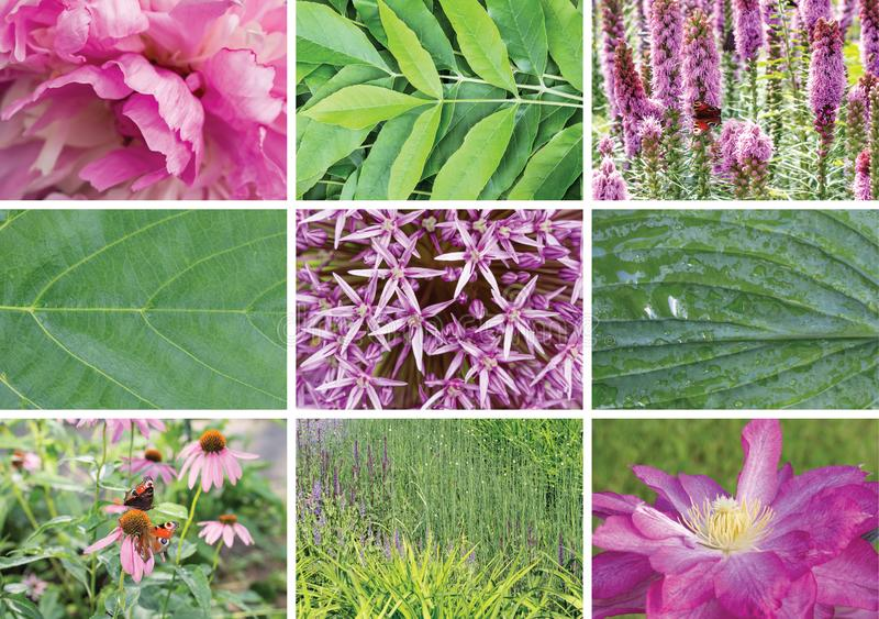 Summer flowers and plant collage. Summer flowers and plant. Summer collage from natural landscapes, abstraction, background, beautiful, blooming, butterfly royalty free stock images