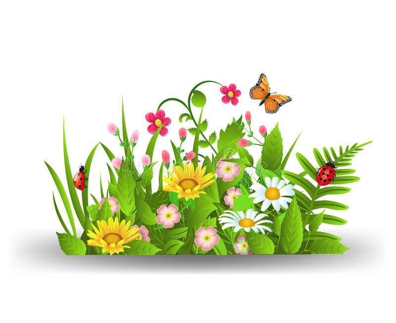 Summer flowers. Vector illustration of summer flowers on a white backgeround