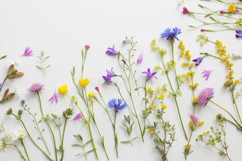 Summer flowers on white paper background royalty free stock photos