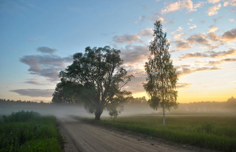 Summer fog. In nice sunset royalty free stock images
