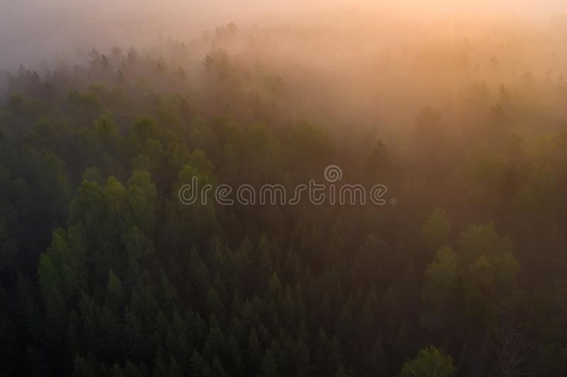 Summer foggy dawn. Aerial background of fog forest in sunlight. Sunrise over misty forest. Wild nature landscape. In sunshine royalty free stock photography