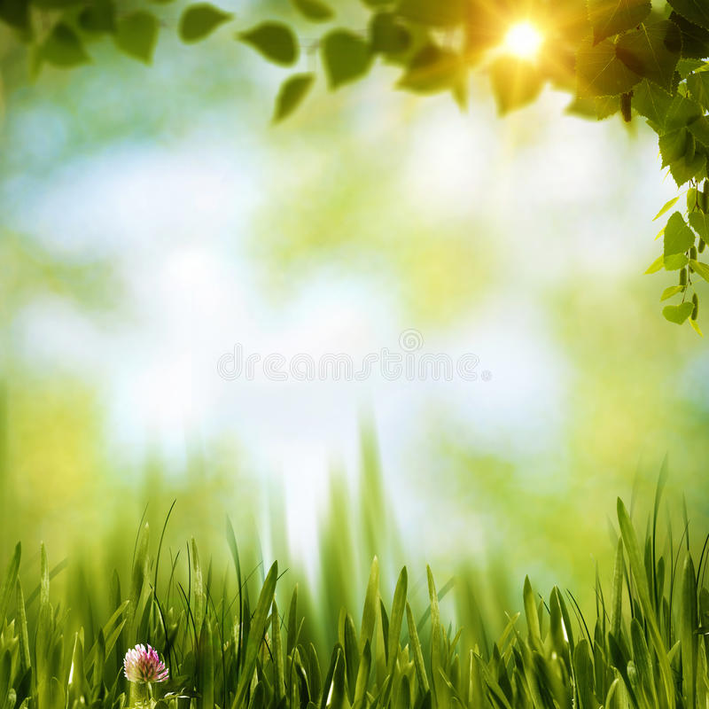Free Summer Forest Royalty Free Stock Photography - 38949567