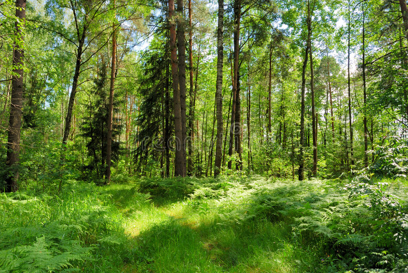 Download Summer forest stock photo. Image of grass, view, forest - 5946580