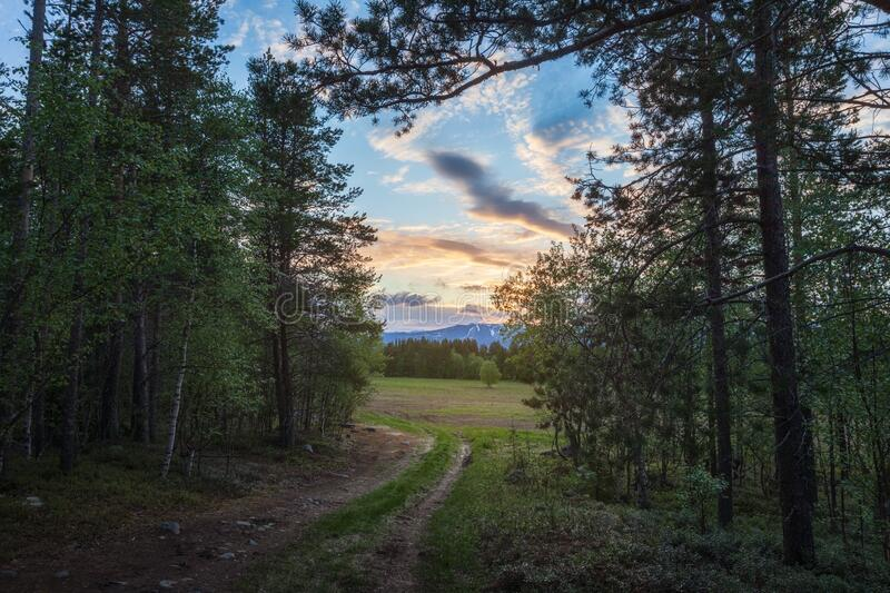 Summer forest against the backdrop of the sunset and the Khibiny mountains, Kola Peninsula, Murmansk region. royalty free stock image