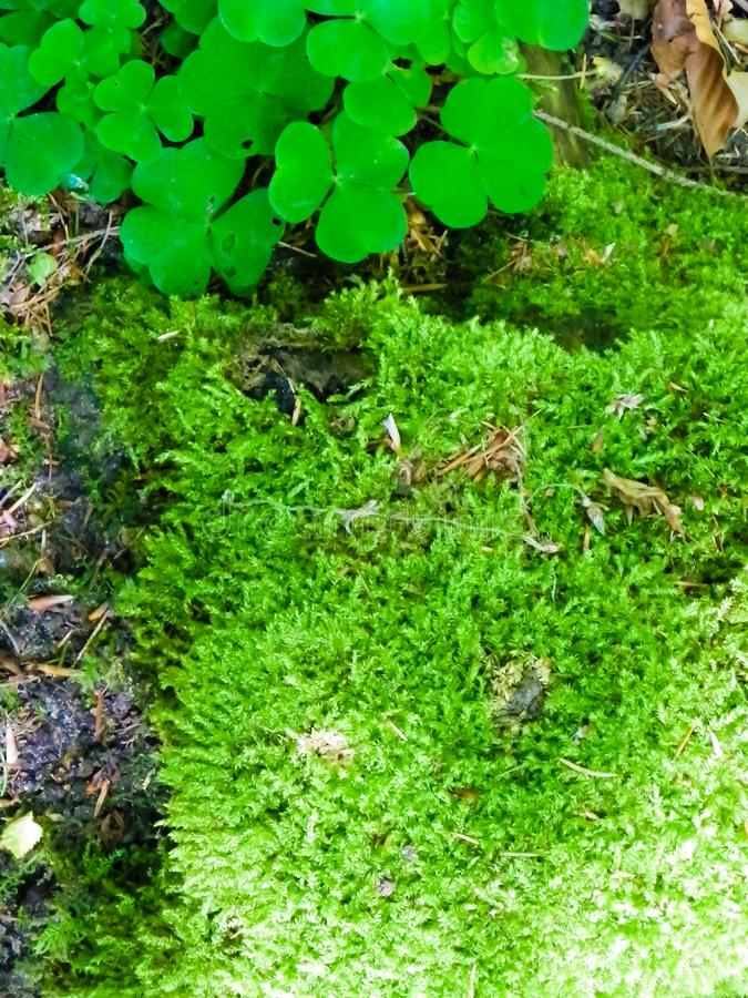 Summer forest bedding as nature background. Summer forest bedding, green moss as nature background. Nature concept stock photo