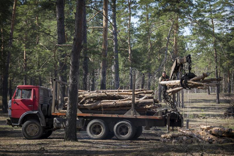 In the summer in the forest deforestation. Two men are loading logs on a car. In the summer in a pine forest deforestation. Men are loading logs on a car stock images