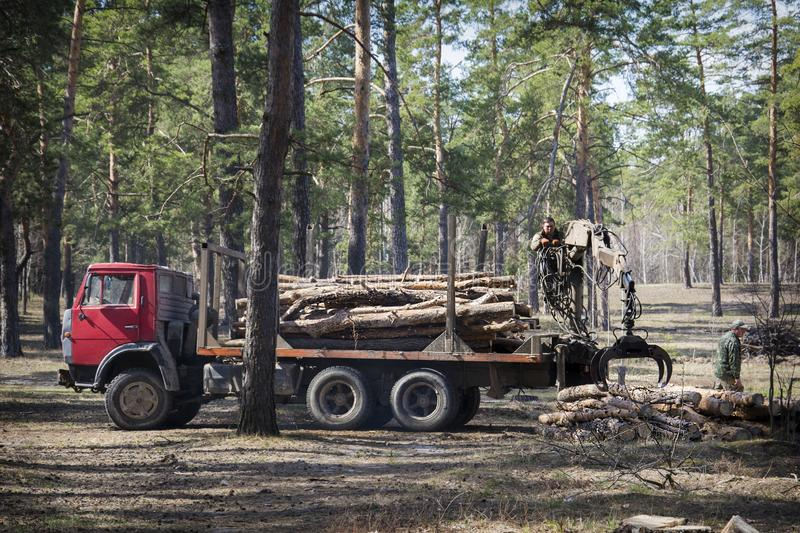In the summer in the forest deforestation. Two men are loading logs on a car. In the summer in a pine forest deforestation. Two men are loading logs on a car stock photo