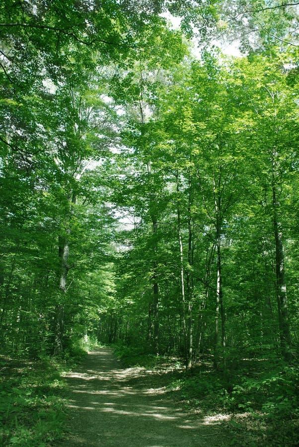 Summer forest landscape stock photo