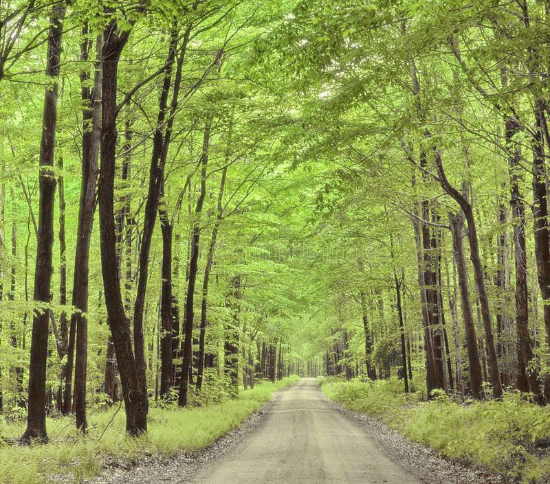 Natural landscape. The road in the summer forest. Summer forest with lush greenery and road royalty free stock image