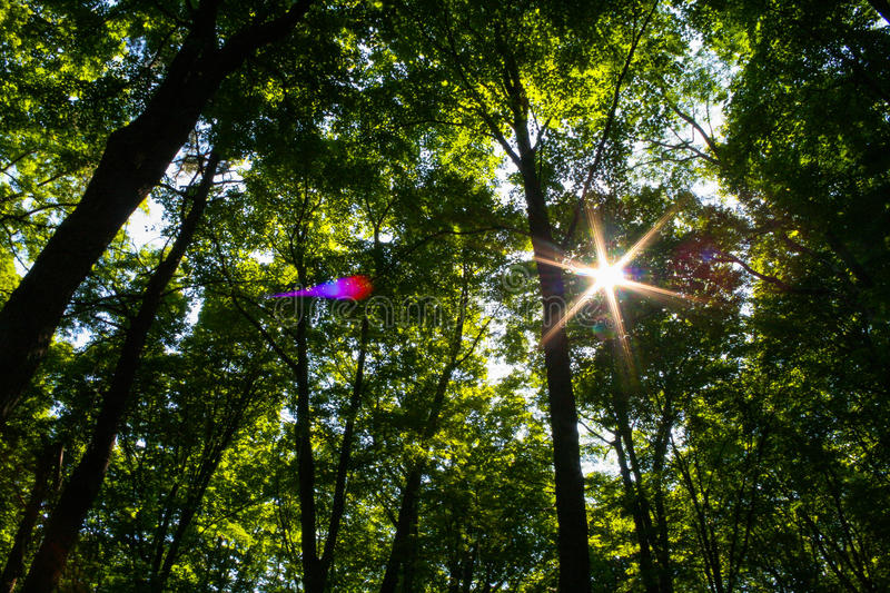 Summer forest royalty free stock images