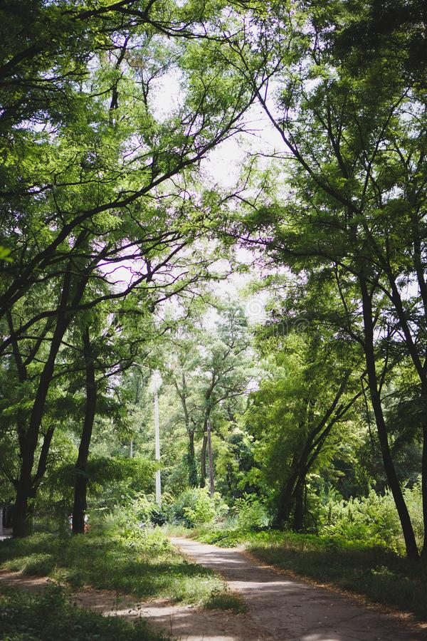 Summer forest. Summer nature. Colorful trees in the forest with a walkway. Vertical frame.  royalty free stock photos
