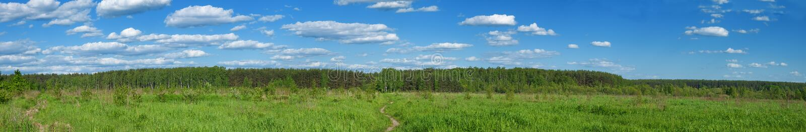 Download Summer forest panoramic stock image. Image of flora, nature - 20654859