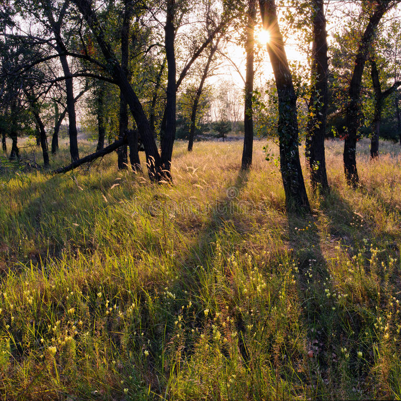 Summer Forest. Play of light in summer forest. Dnipropetrovsk, Ukraine stock photography