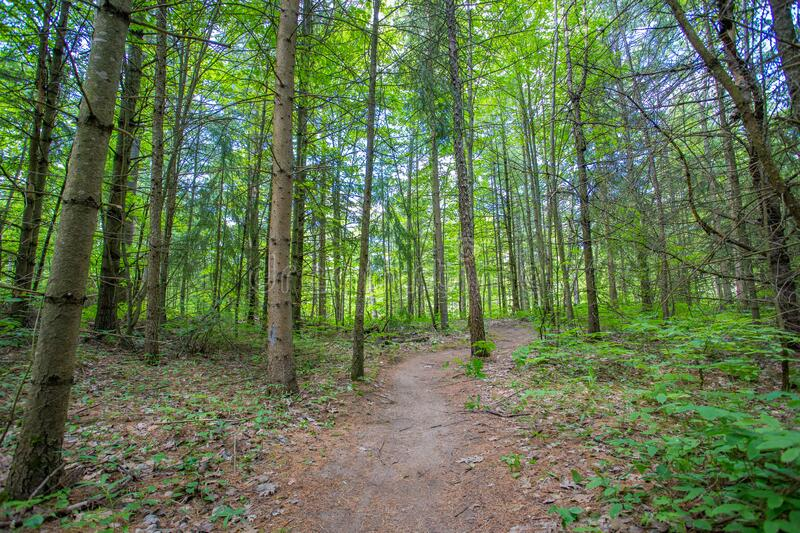 Summer Forest Trail and Trees stock image