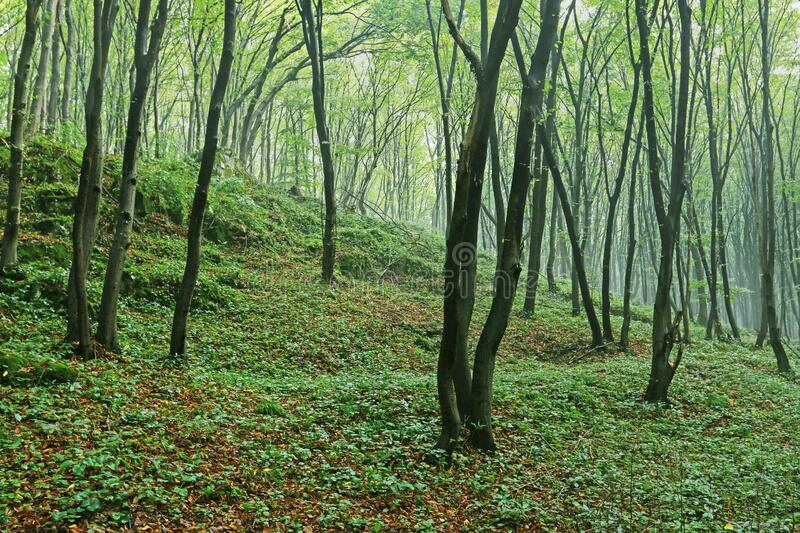 295 495 Forest Wallpaper Photos Free Royalty Free Stock Photos From Dreamstime