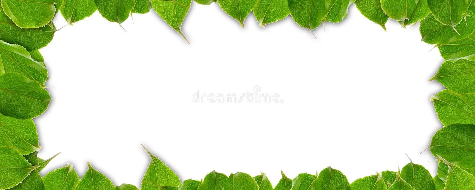 Summer Frame of Green Leaves royalty free stock photography